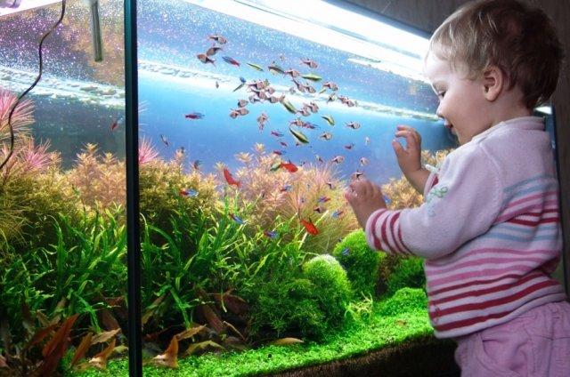 Типы аквариумов для детей, новичков и профессионалов