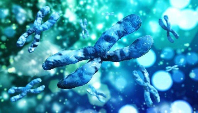 Хромосомные болезни человека. Трисомии